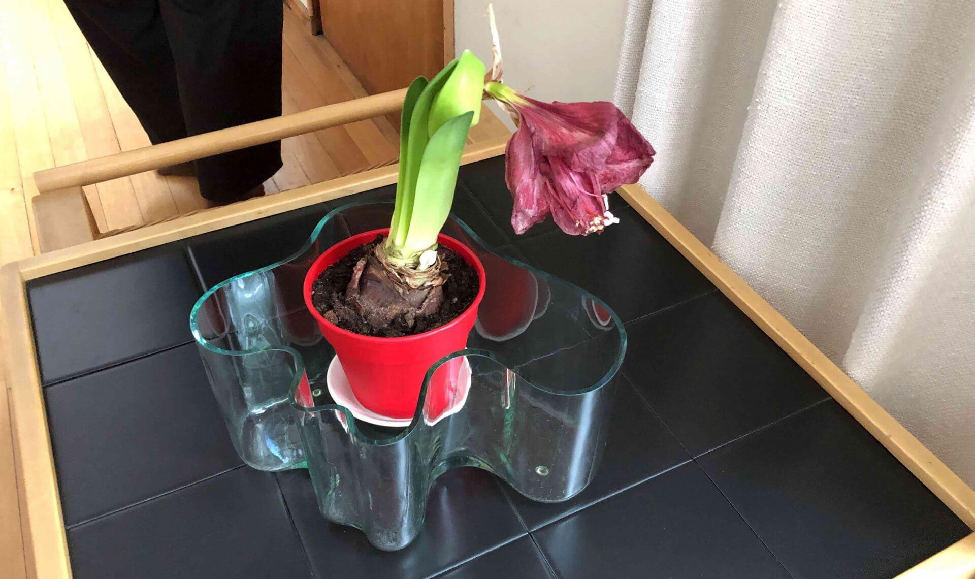 アアルト自邸のリビングには自身がデザインしたイッタラのアアルトベースの中に花が飾られていた